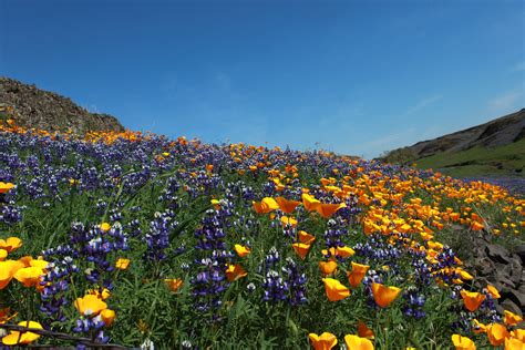 table ca table mountain butte county ca flowers
