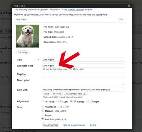 this examle uses the divposts tag to enable a custom loop the definitive guide to using images on your blog