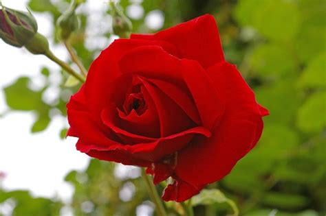 festa dei fiori sanremo mercato dei fiori di sanremo le quotazioni di marzo