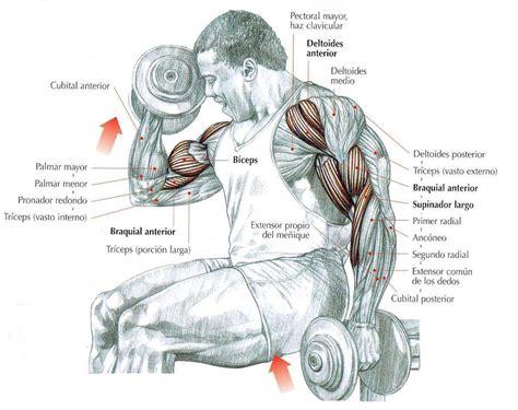 ejercicios mancuernas en casa 15 ejercicios con mancuernas indispensables ejercicios