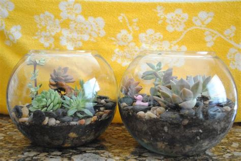 Handmade Terrariums - diy terrarium a great gift idea i can do this myself