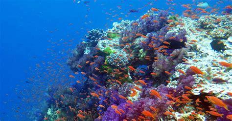 fiji scuba diving resorts liveaboards diving fiji