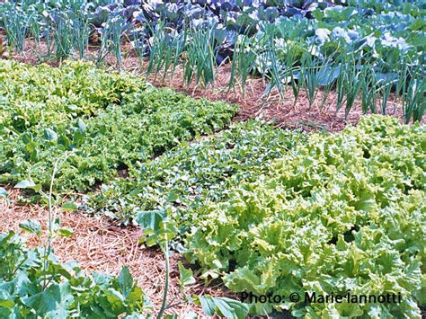 how to maintain your vegetable garden