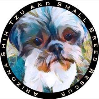 arizona shih tzu rescue pets for adoption at arizona shih tzu and small breed rescue in az petfinder