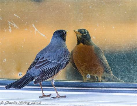 outside my window 187 2013 187 april