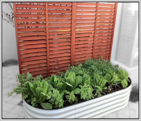 windowsill herb garden kit windowsill herb garden kit home design