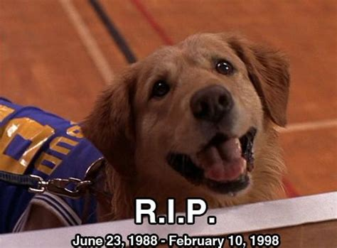 the dog from full house 22 best images about air bud air buddies on pinterest