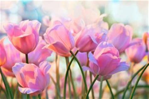 fiori da piantare in aprile quali sono i fiori puoi piantare ad aprile fito