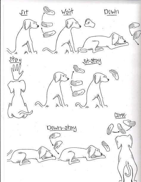 puppy in sign language rescue and shelter dogs freedom tails signs and commands canine