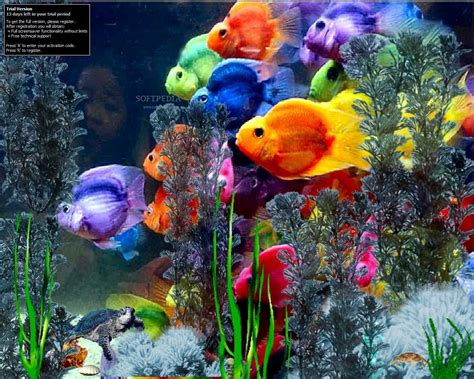 wallpaper colorful fish and interactive water microsoft free screensavers and wallpapers wallpaper cave
