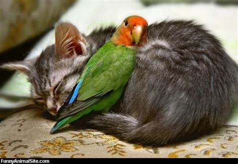 bird and cat funny animal pictures