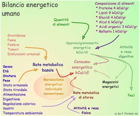 calcolo calorico degli alimenti fabbisogno energetico umano