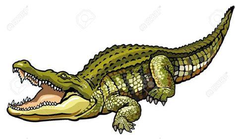 crocodile clipart american crocodile clipart clipground