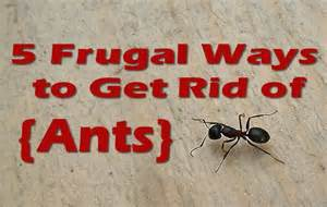 5 frugal ways to get rid of ants mother s home