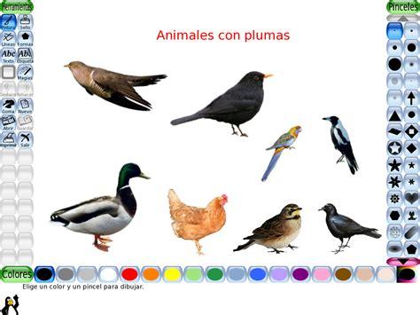Imagenes Animales Con Plumas   norma edith gauto medina los alumnos del primer grado