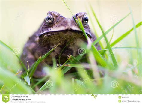 angry stock image image  fauna  image