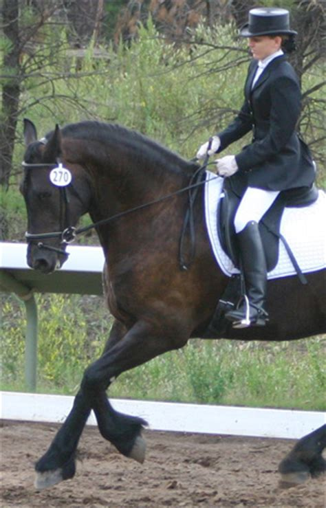 best shoes for horseback best shoes for horseback 28 images 46 best images