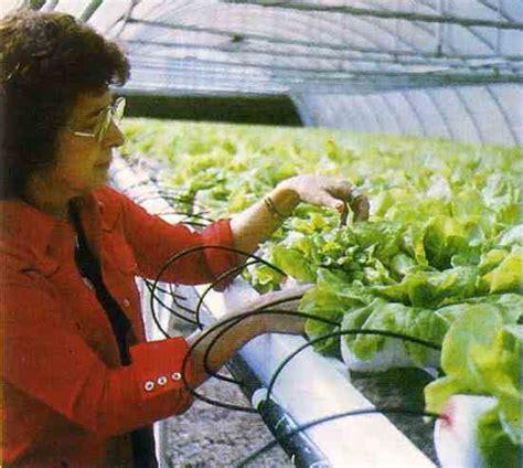 backyard cash crops raise greenhouse vegetables as cash crops organic