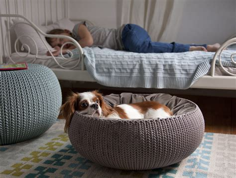 pet r for bed knit by curver pet beds and furniture dog milk