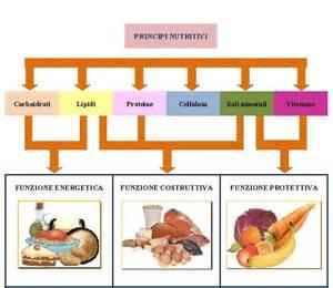 vitamine negli alimenti principi nutritivi i cibi e la loro funzione