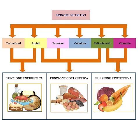 alimenti mangia grassi principi nutritivi i cibi e la loro funzione