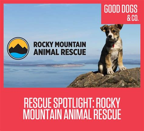 rocky mountain puppy rescue 49 best images about rescue stories on adoption therapy dogs and rescue dogs