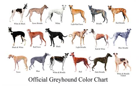 greyhound the un official greyhound color chart
