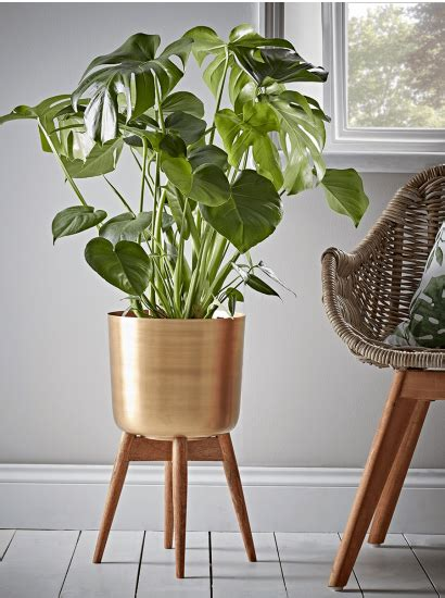 image result  tall floor standing plant  images