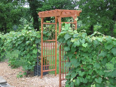 garden trellis plans building a garden arbor plans diy free download building