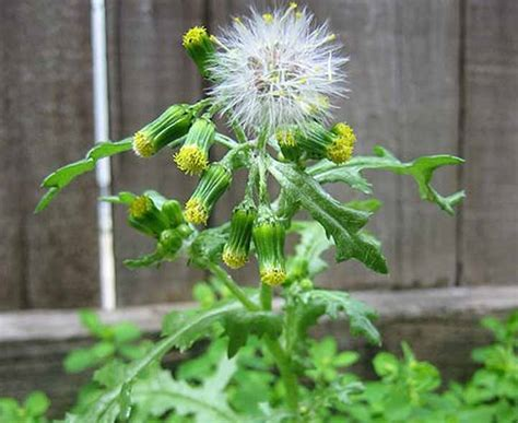 backyard weeds quiz on annual garden weeds recognition and identification