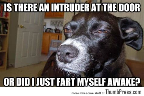 Funny Animal Meme - mindless mirth funny animal memes