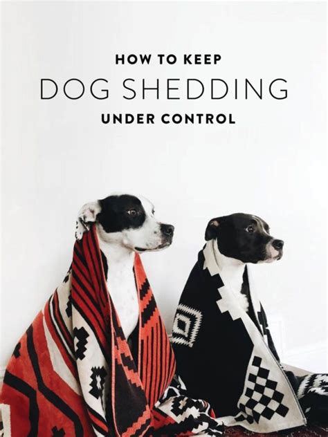 How To Keep Dogs From Shedding So Much 25 best ideas about shedding remedies on