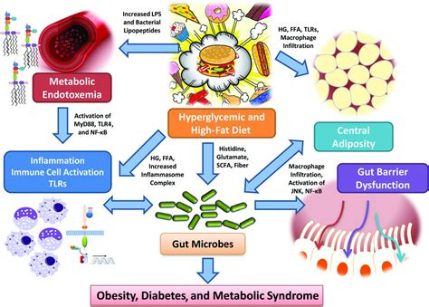 The New Metabolism Diet Also Search For The Human Gut Microbiome And Metabolism Implications For Obesity And Diabetes