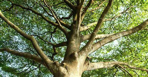 Welke Boom In De Tuin by 8 Oplossingen Voor De Inkijk In De Tuin Verminderen Welke