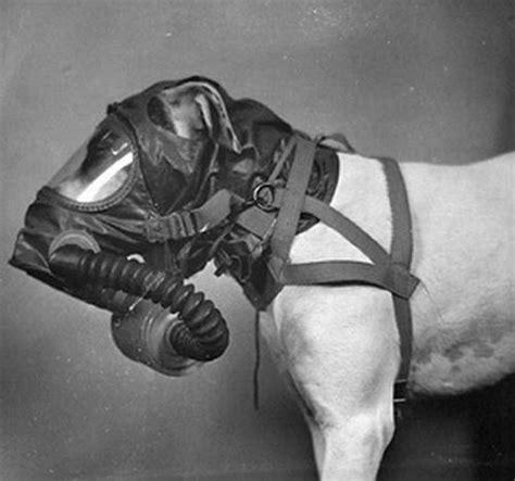 puppy gas us army gas masks 20 pics izismile