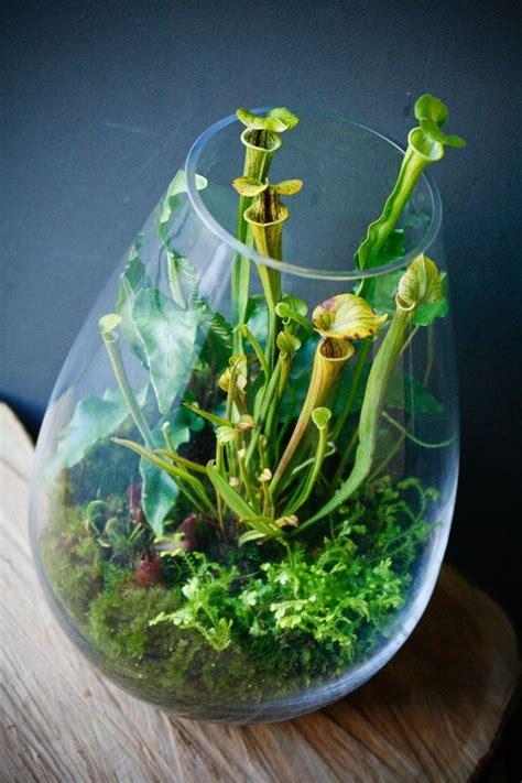 25 best ideas about carnivorous plants on pinterest