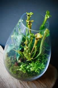 create  fascinating carnivorous terrarium terrarium