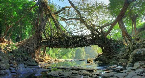 living bridges mawlynnong itinerary location things to do at asia s