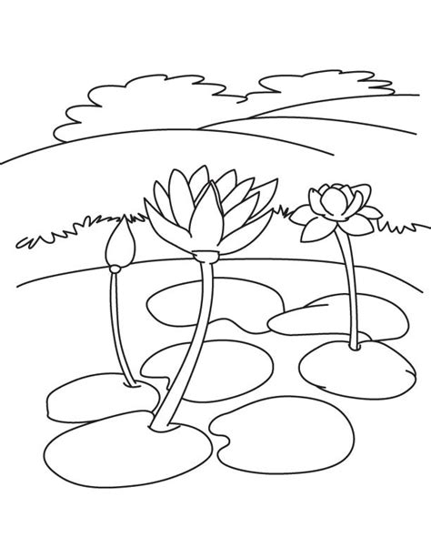water lily flowers coloring page with coloring pages of water