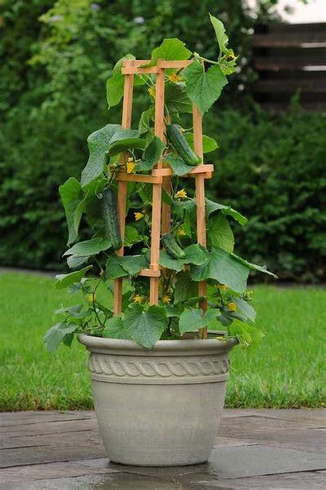 vegetables  grow  pots  productive