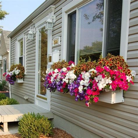 flower window box ideas 12 window boxes for amazing morning view