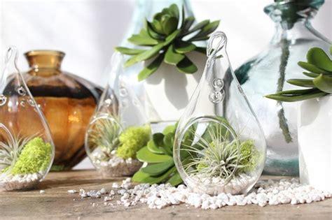 poudre blanche sur plantes d int rieur le potager d int 233 rieur en 50 belles id 233 es