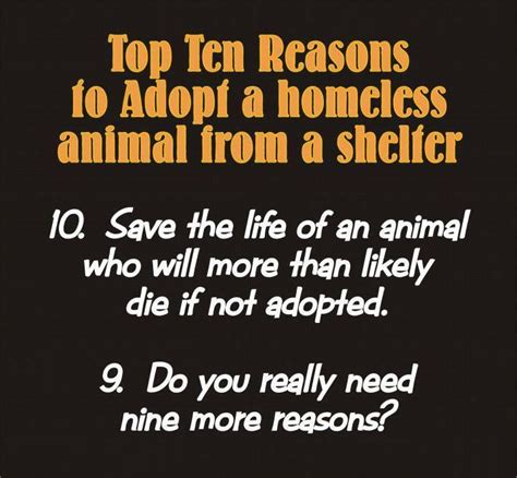 8 Reasons To Adopt A Pet From A Shelter by 17 Best Images About Pet Adoption On Shelters