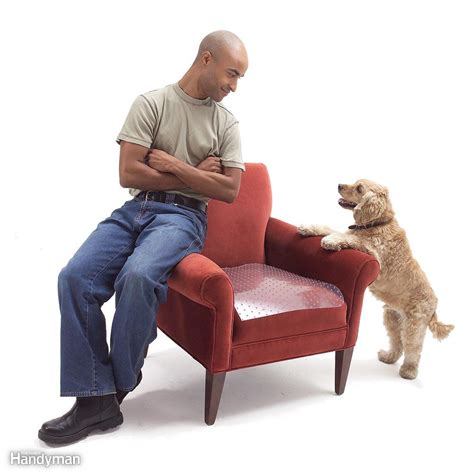 dog couch deterrent 14 cleaning tips every dog or cat owner should know the