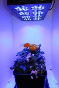 what color light do plants grow best in what colour light do plants grow best in