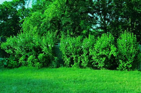 bushes trees and grass by cristela90 on deviantart