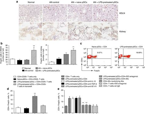 frontiers induction of regulatory t induction of regulatory t cells tregs in vivo and in