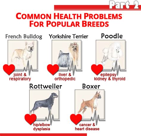 golden retriever breathing problems common health problems for popular breeds part 2 show confidential