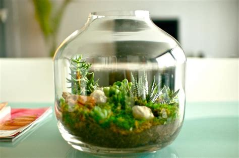 mini plants miniature gardens