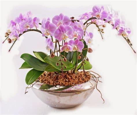Pot Anggrek Kayu Ulin dunia tanaman hias cara merawat anggrek dalam pot dengan